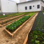 Vale ressaltar, que o projeto da horta do Hospital Materno Infantil Santa Catarina é 100% orgânica e forma um ciclo com uma série de benefícios para nós e o meio ambiente. A compostagem favorece o descarte sustentável, o que diminui a quantidade de lixo encaminhada para os aterros e reduz o custo de coleta e transporte